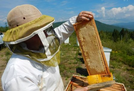Vol de ruches: une méprise