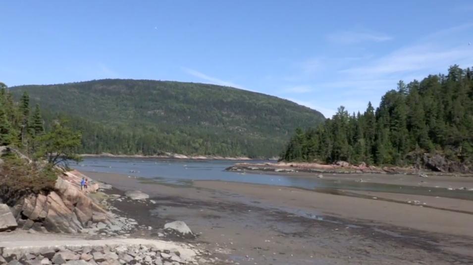 Première à Baie-des-Rochers : excursions sur la biodiversité cet été ! (vidéo)