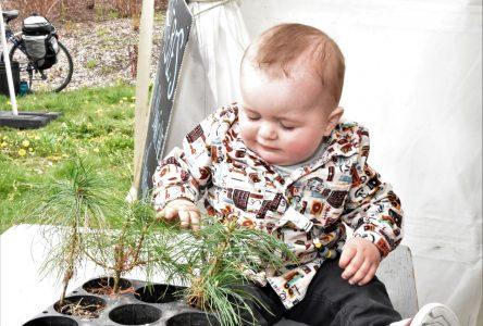 C'est la Journée de l'arbre à Baie-Saint-Paul