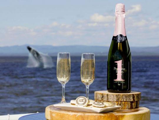 Croisière aux baleines VIP avec AML