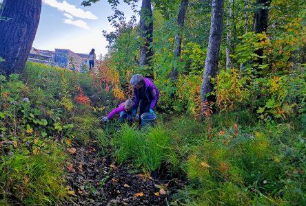 (Vidéo) Que cachent les boisés de l'École Secondaire du Plateau? Plein de déchets