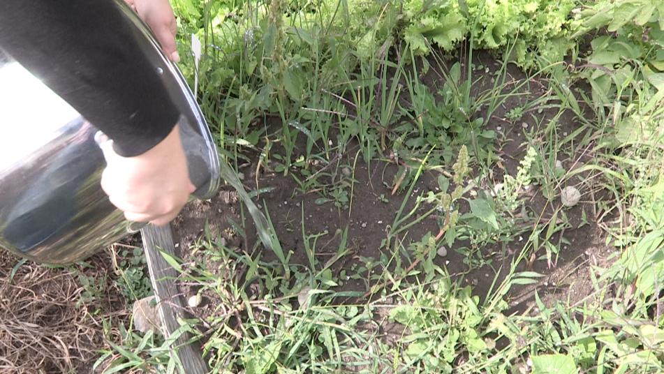 (Capsule 5) Virage vert Charlevoix : la récupération de l'eau de pluie