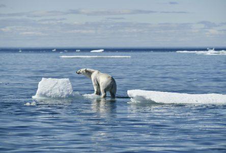 Environnement : urgence d'agir