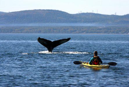Tourisme et COVID-19: Ottawa doit en faire plus, dit le Bloc Québécois