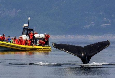 Croisières aux baleines: la saison n'est pas complètement à l'eau
