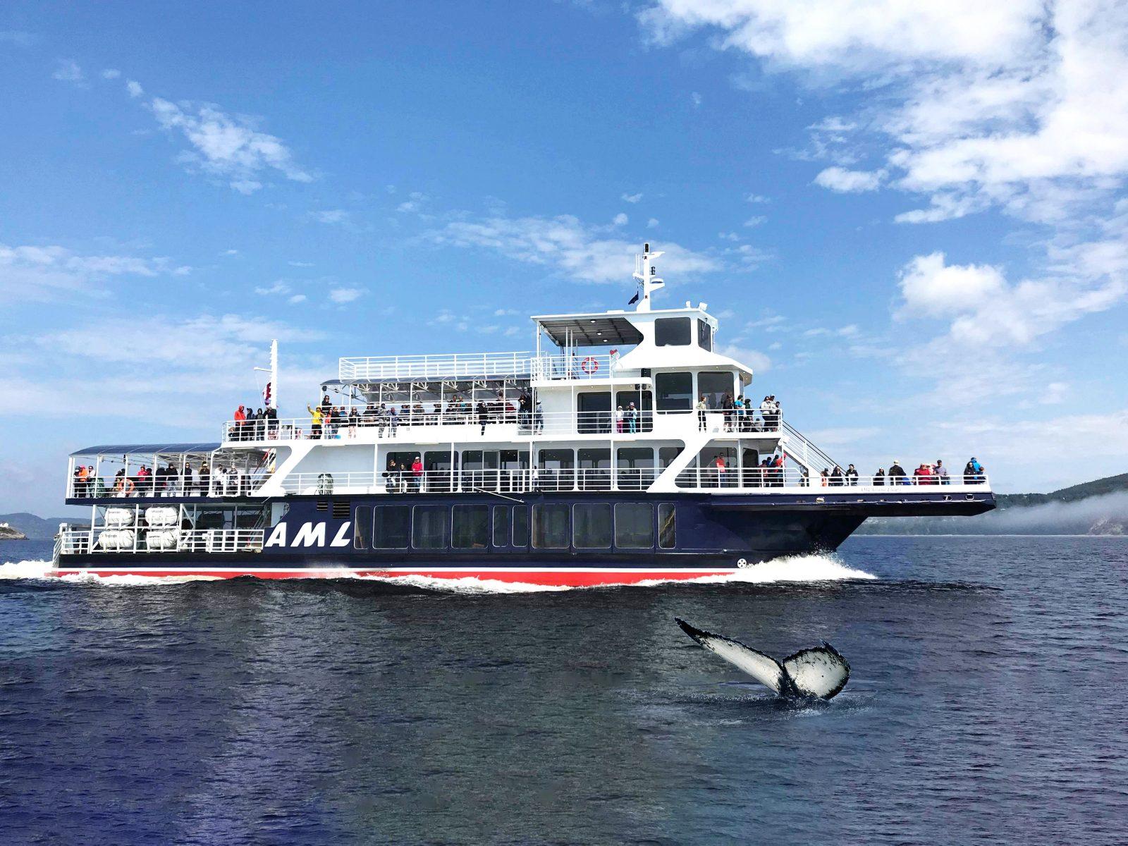 Croisières aux baleines : une industrie résiliente