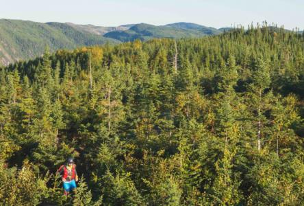 L'Ultra-Trail Harricana du Canada maintient ses longues distances