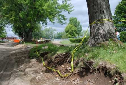 Des arbres mis à mal par la construction de la nouvelle rue des Petites-Franciscaines de Marie à Baie-Saint-Paul
