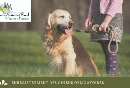 L'enregistrement des chiens est maintenant obligatoire à Baie-Saint-Paul