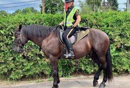 Les patrouilleurs équestres surveillent les automobilistes de La Malbaie