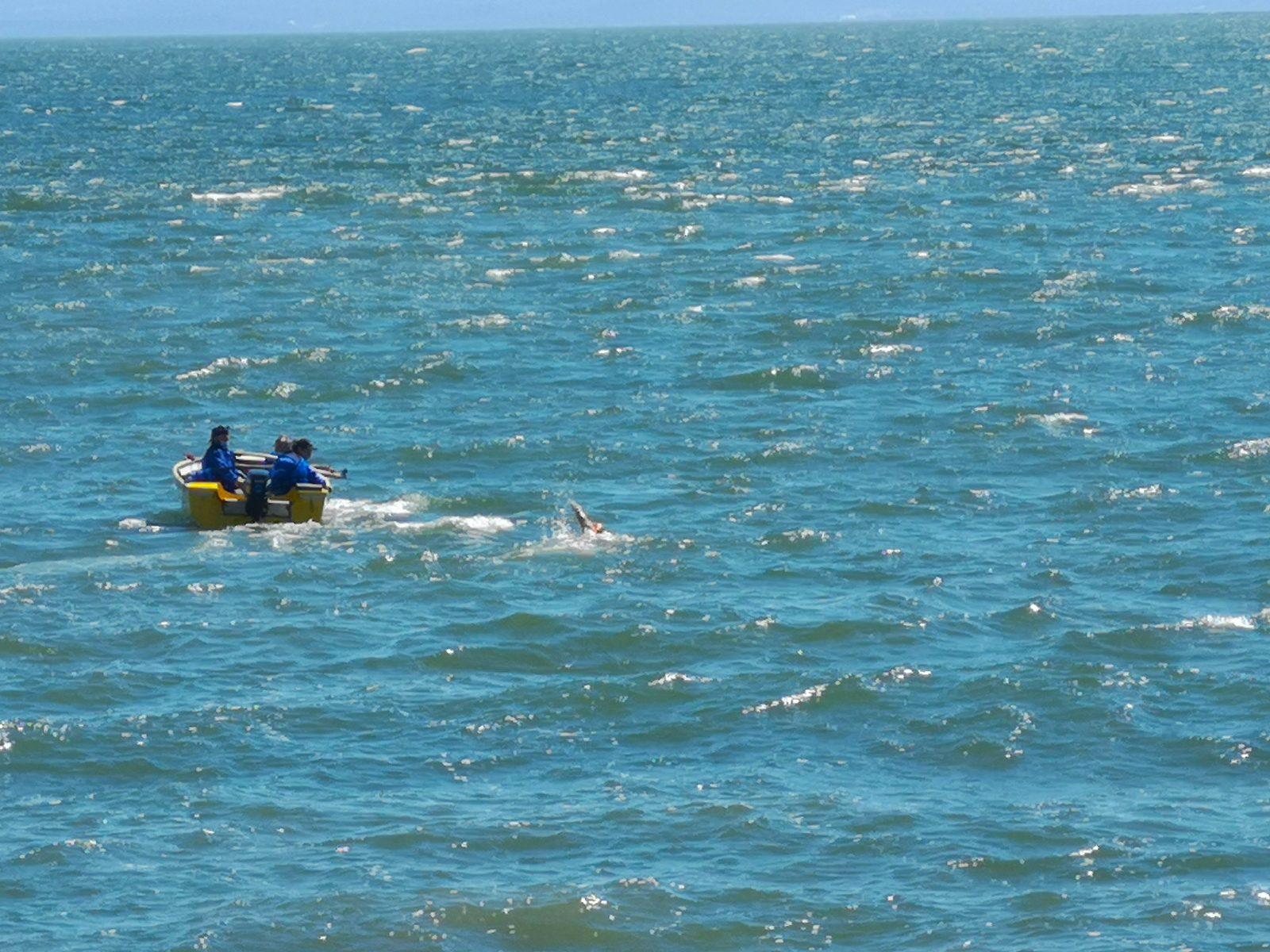 (VIDÉO) Nicolas Knap marque l'histoire et réussit sa traversée du fleuve à la nage