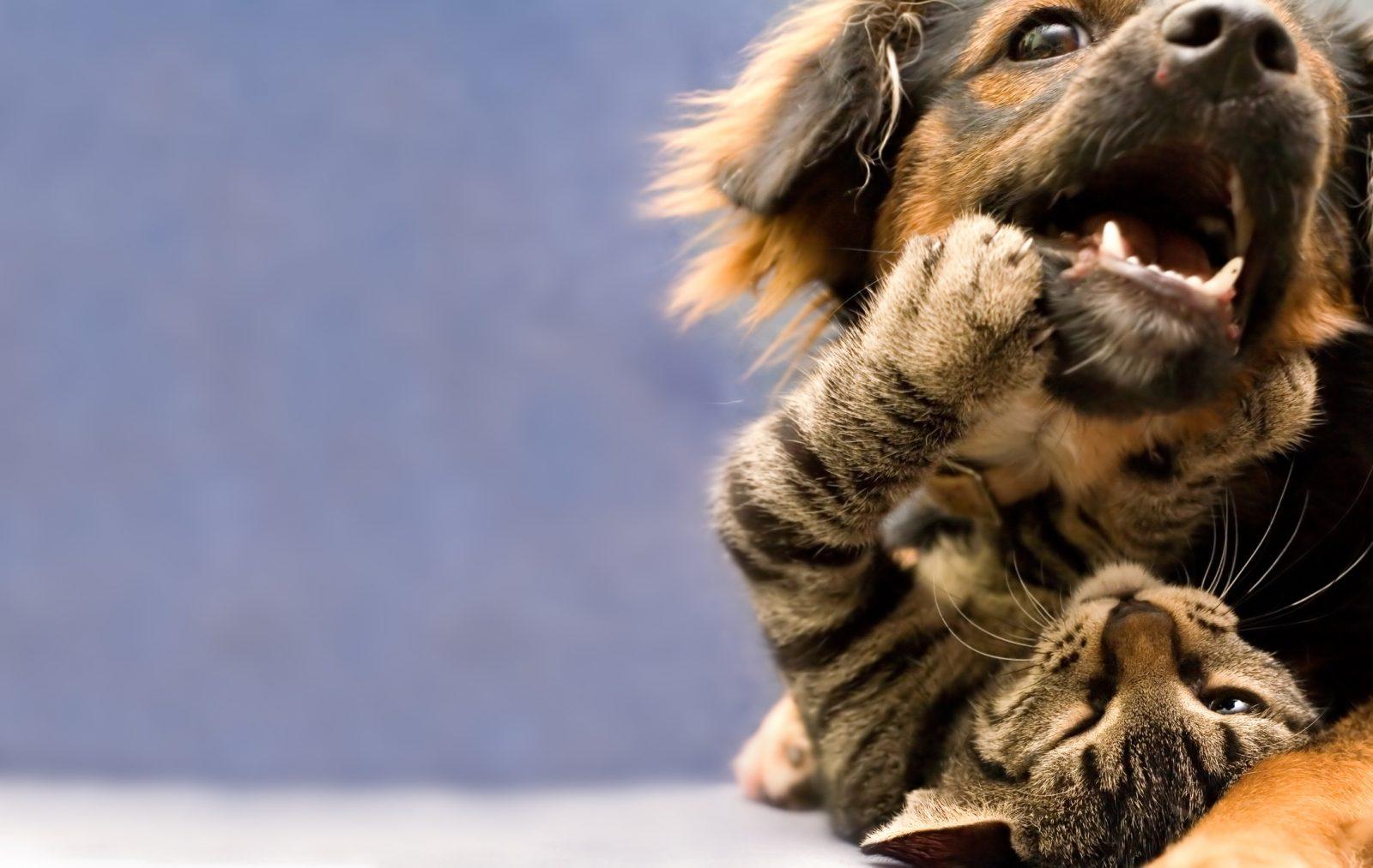Adopter Un Animal Un Pensez Y Bien Meme En Temps De Covid Le Charlevoisien