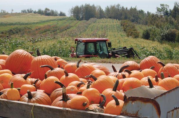 Les institutions publiques devront acheter plus d'aliments québécois