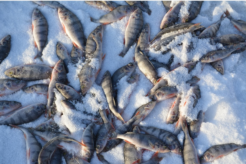 La pêche blanche autorisée 10 jours au Lac Noir de Saint-Siméon